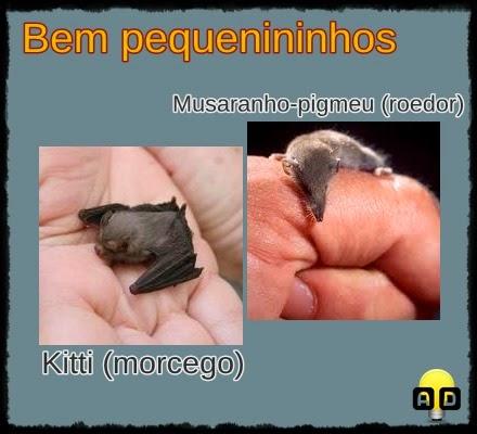menores animais do mundo
