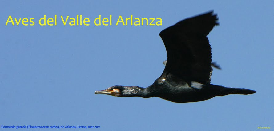 AVES DEL VALLE DEL ARLANZA
