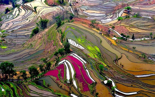 rice terraces - yunnan, china
