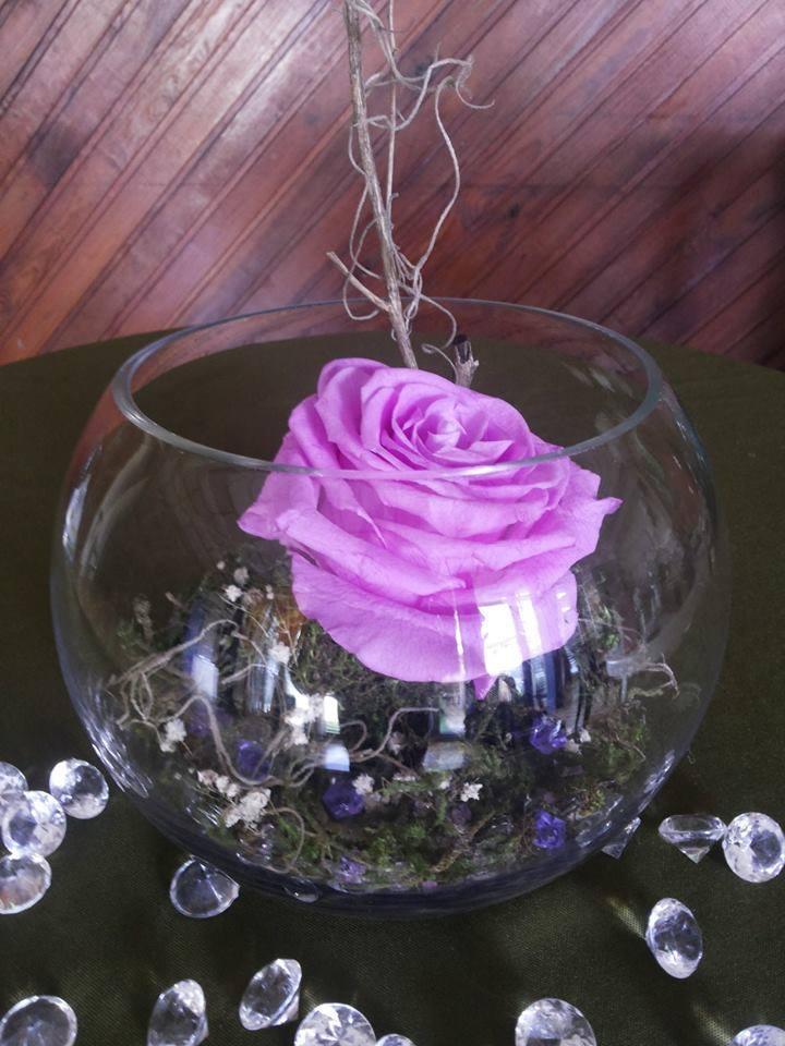Rosas Naturales Preservadas Morado Lila ¡Duran 4 Años!
