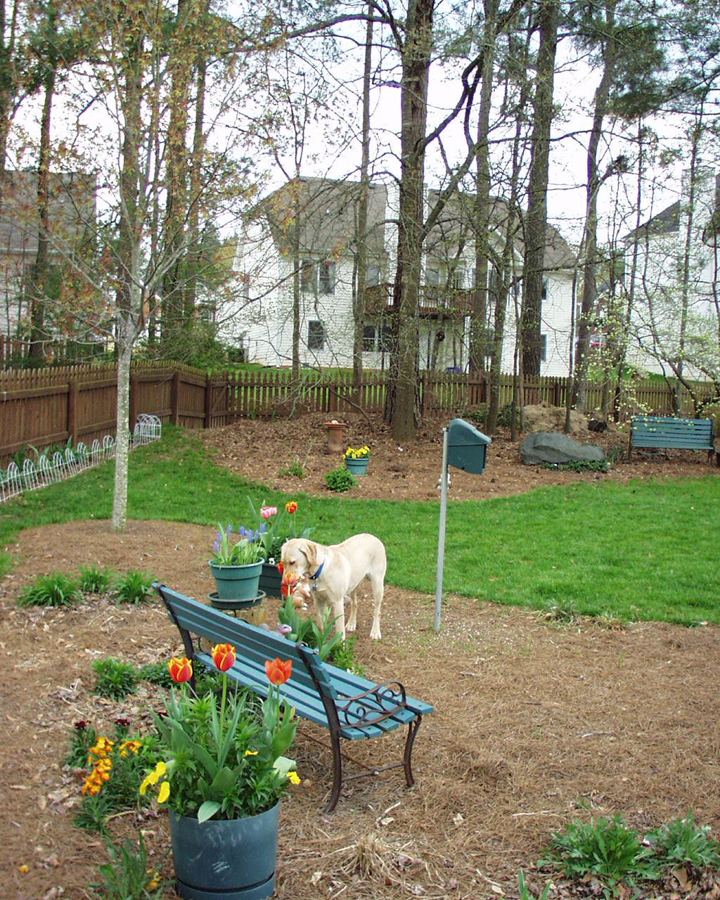 my carolina yard separating plants and pets in a landscape