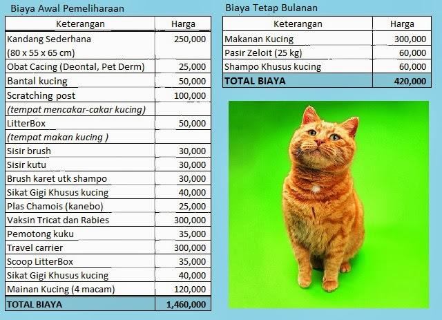 dan Sehat: Berapakah Biaya Pemeliharaan dan Perawatan Kucing Persia