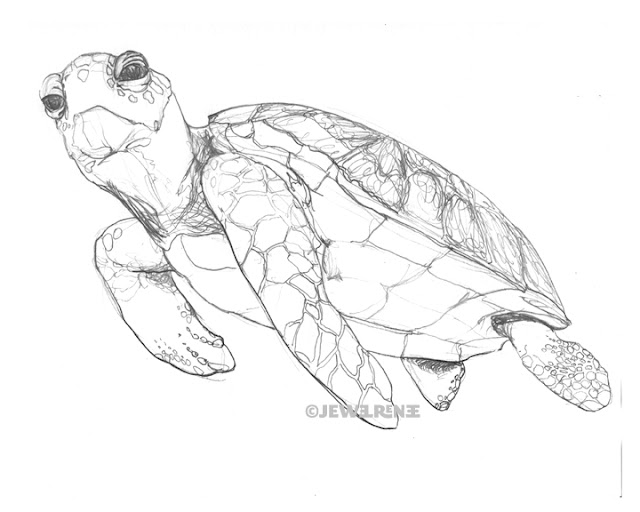 Sea Turtle Sketches http://jewelrenee.blogspot.com/2011/06/sea-turtle-drawing.html