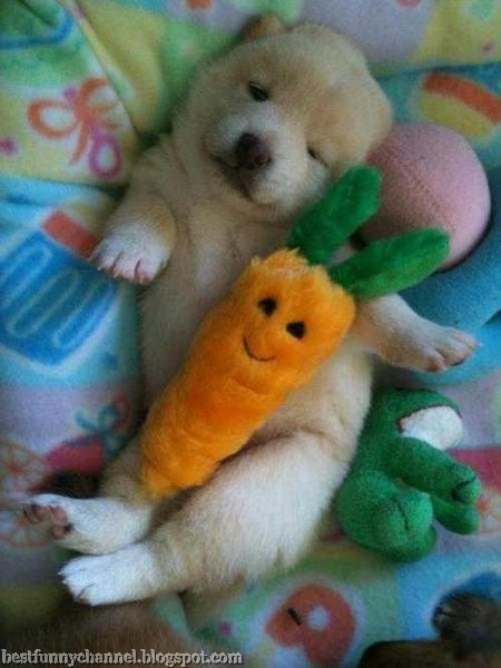 Puppy with a carrot