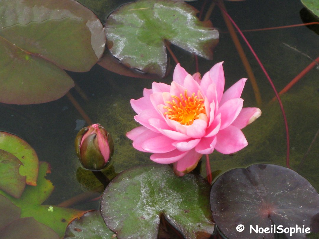 Rencontres au lotus