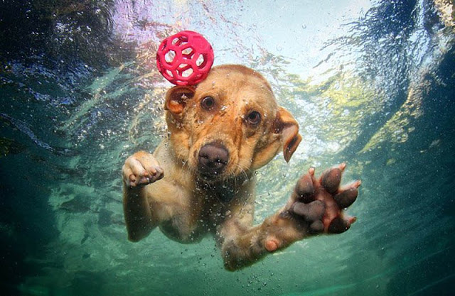 amazing underwater photography with dogs
