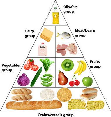 food pyramid essay kids