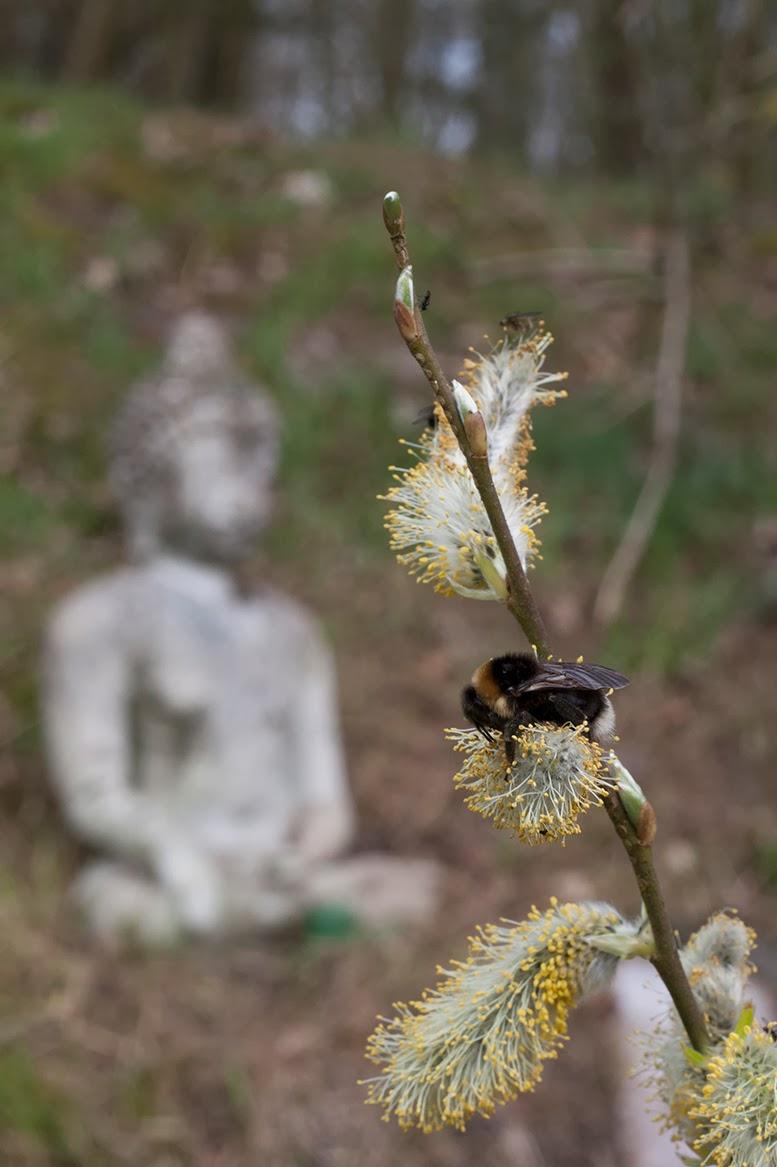 bee with buddha