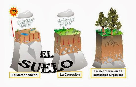 La ciencia loca for Como se forma y desarrolla el suelo