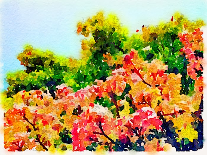 Rainbow Leaves on a tree in Oregon using Waterlogue app