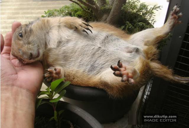 HEWAN LUCU MONYET KUCING ANJING LUCU BAGUS MENARIK IMUT ANJUNG ANEH BINATANG DUNIA ANIMALS 4