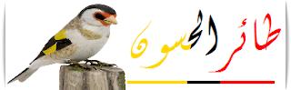 فضاء تربية طائر الحسون و الهجين