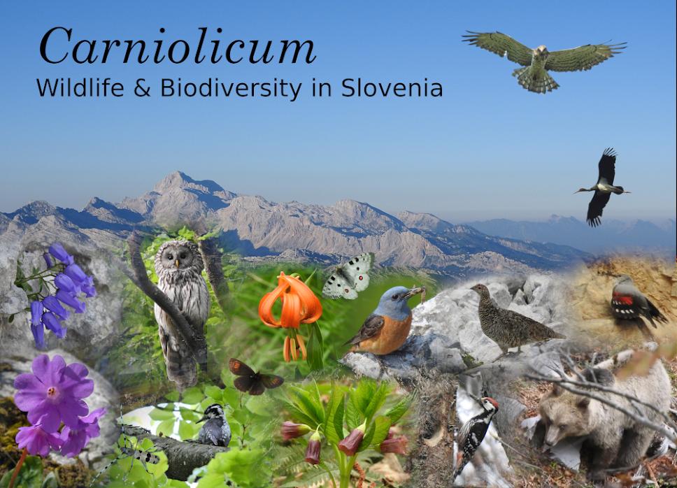 Carniolicum - Wildlife & Biodiversity in Slovenia