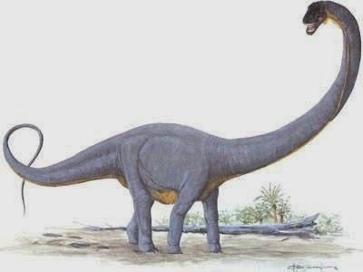 Supersaurus vivianae