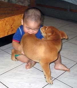anak gigit anjing