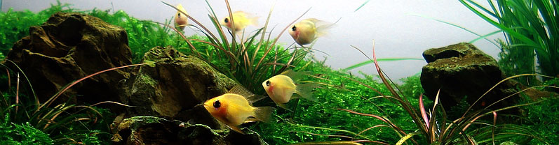 Best Freshwater Fish for Aquarium Aquascaping