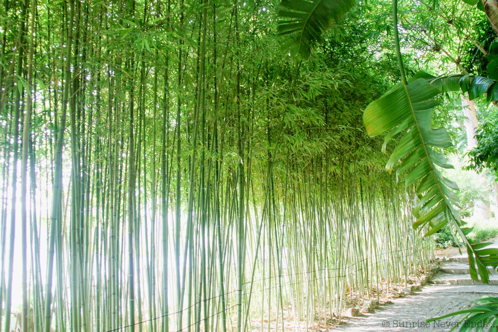 bambous,villa ephrussi de rothschild,saint jean cap ferrat,hello riviera