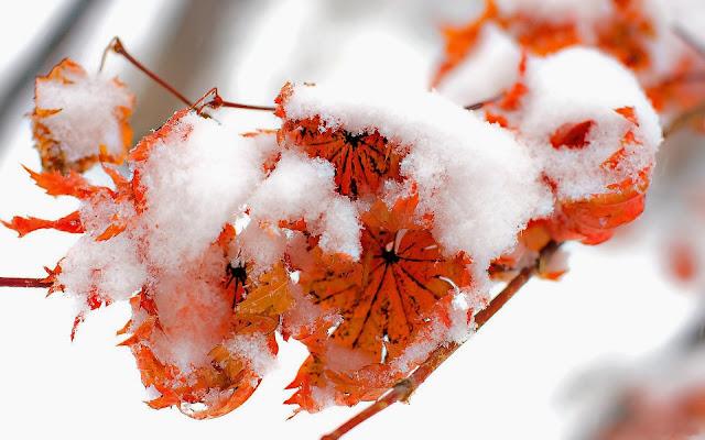 Hình nền tuyết trắng mùa đông