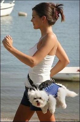 VO TOM TO JE: Mluvící pes na prodej