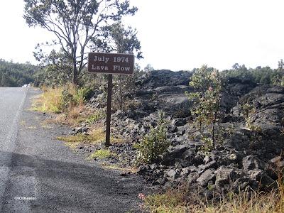 tree on lava flow, Hawaii