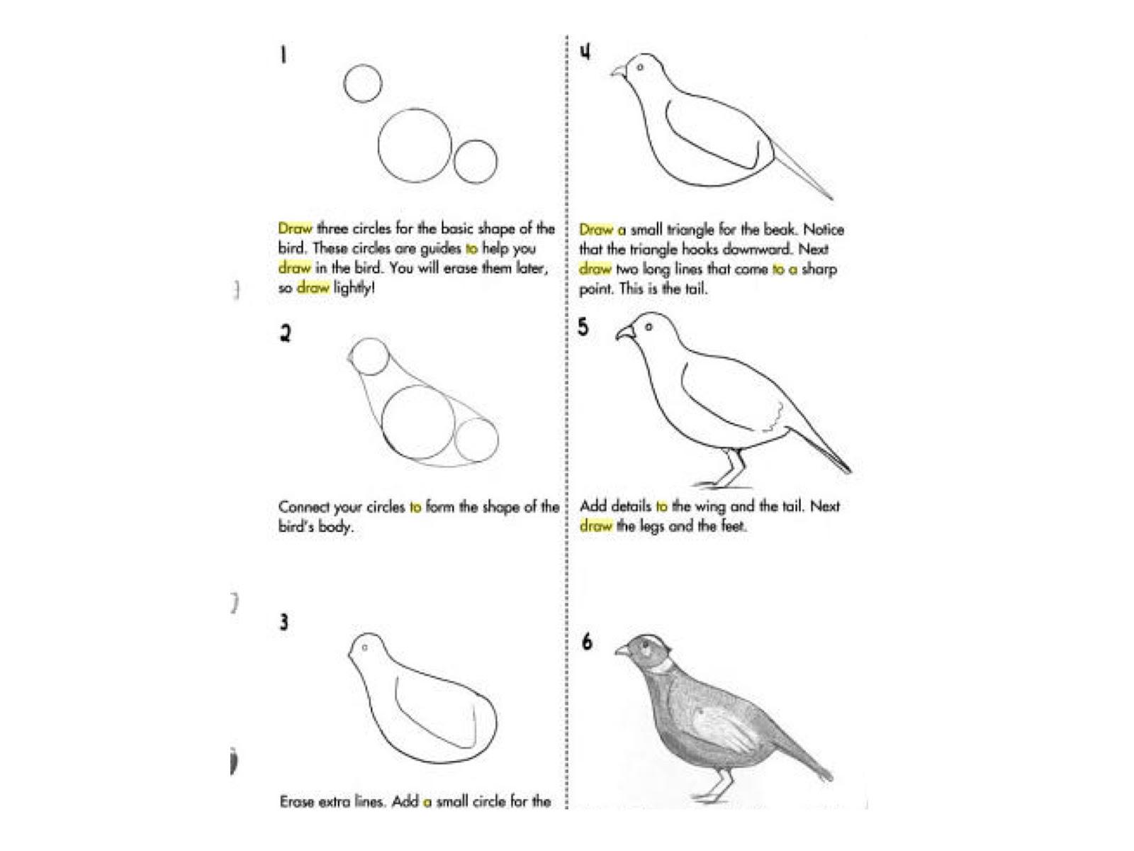 art at becker middle school more bird drawing ideas