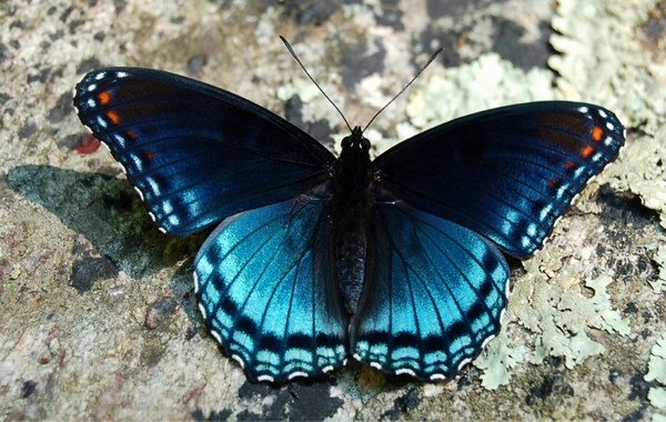 Butterfly Sitting on Stone ds, Images of Nuyama,/Terroirst