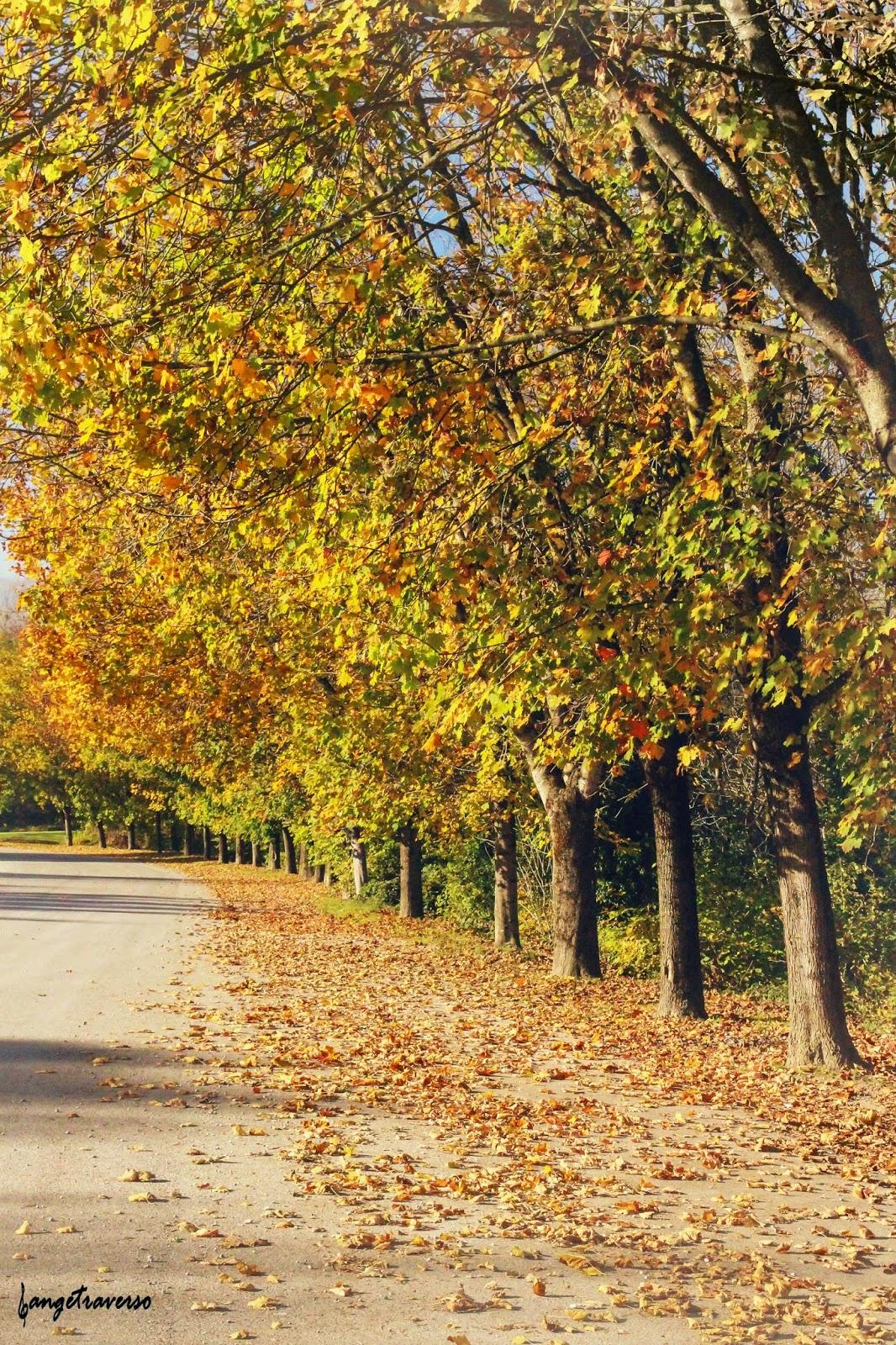 rangée d'arbres aux couleurs d'automne, Haute-Savoie