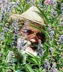 Maurice Godefridi Herborist / Herbalist