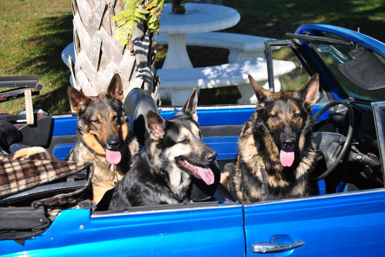 Hunde in Florida - Tips und Gefahren | Florida, Ratschlaege und Tips ...