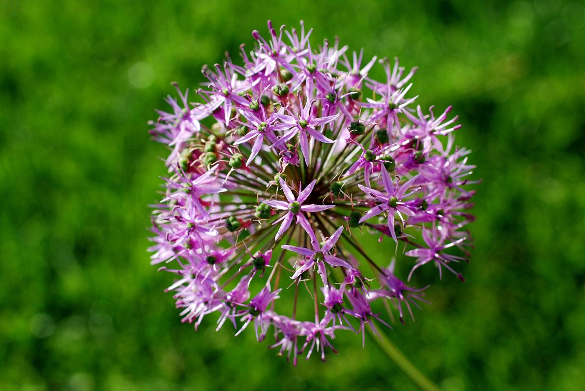 Il mondo in un giardino il momento di piantare i bulbi for Piantare un giardino
