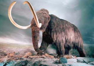 clonacion de mamut