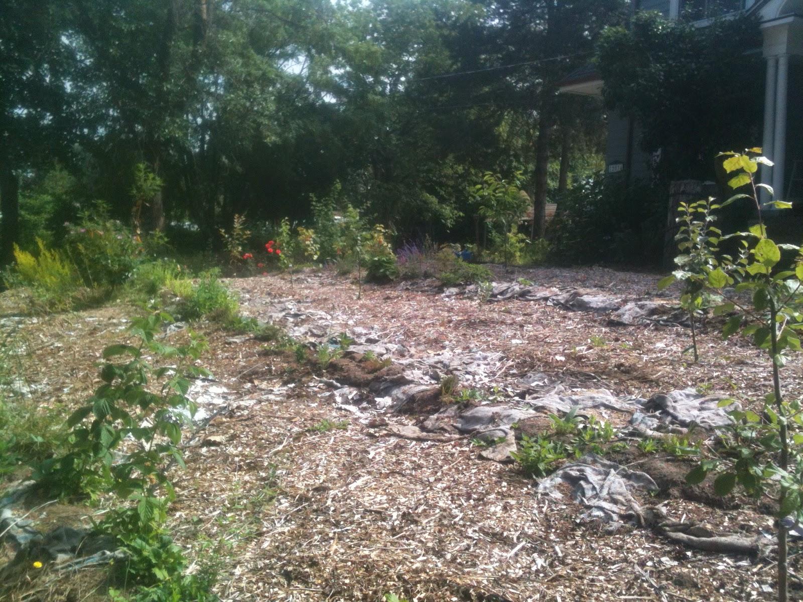 Several gardens farm lawn to garden conversion first summer for Garden conversion