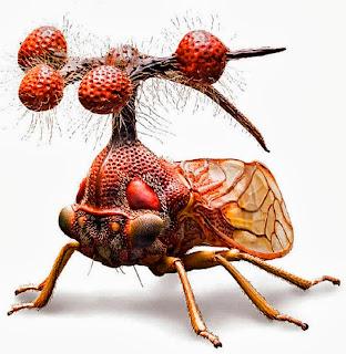El insecto más raro del mundo