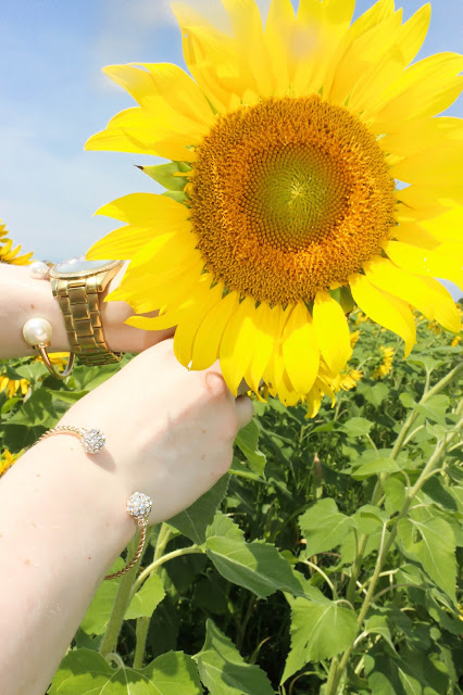 Batey Farms, sunflower field, Murfreesboro, Tennessee, Ann Taylor, lawyer fashion, Helen's Jewels, pearl cuff bracelet