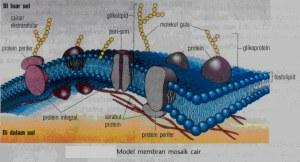 lipid penyusun membran