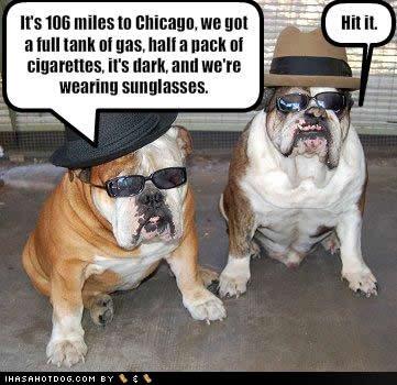 Funny++Dog+mafia