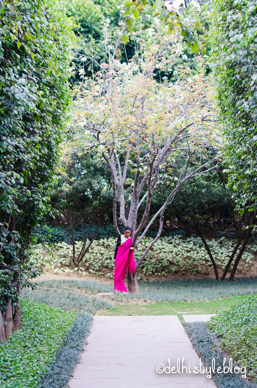 Flowering Peach tree Dusit Devrana