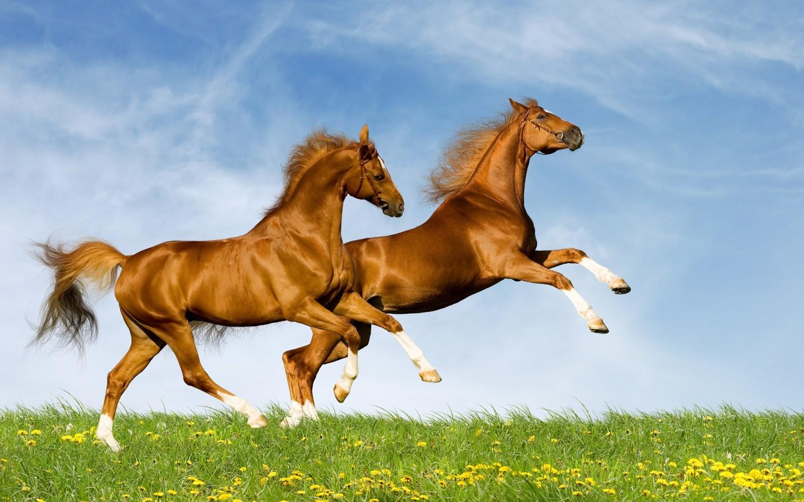 Nota: Click aquí para ver más imágenes de caballos