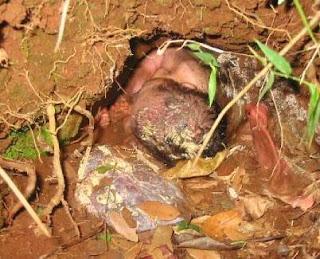 1 Kebesaran Allah, bayi keluar dari dalam lumpur