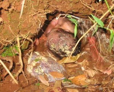 bayi keluar dari lumpur