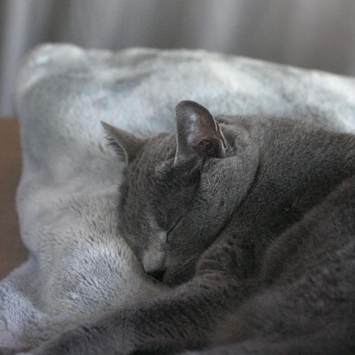 maus allegra andere katzen alter schlafplatz neu entdeckt. Black Bedroom Furniture Sets. Home Design Ideas