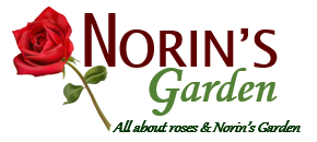 All About Norin's Garden
