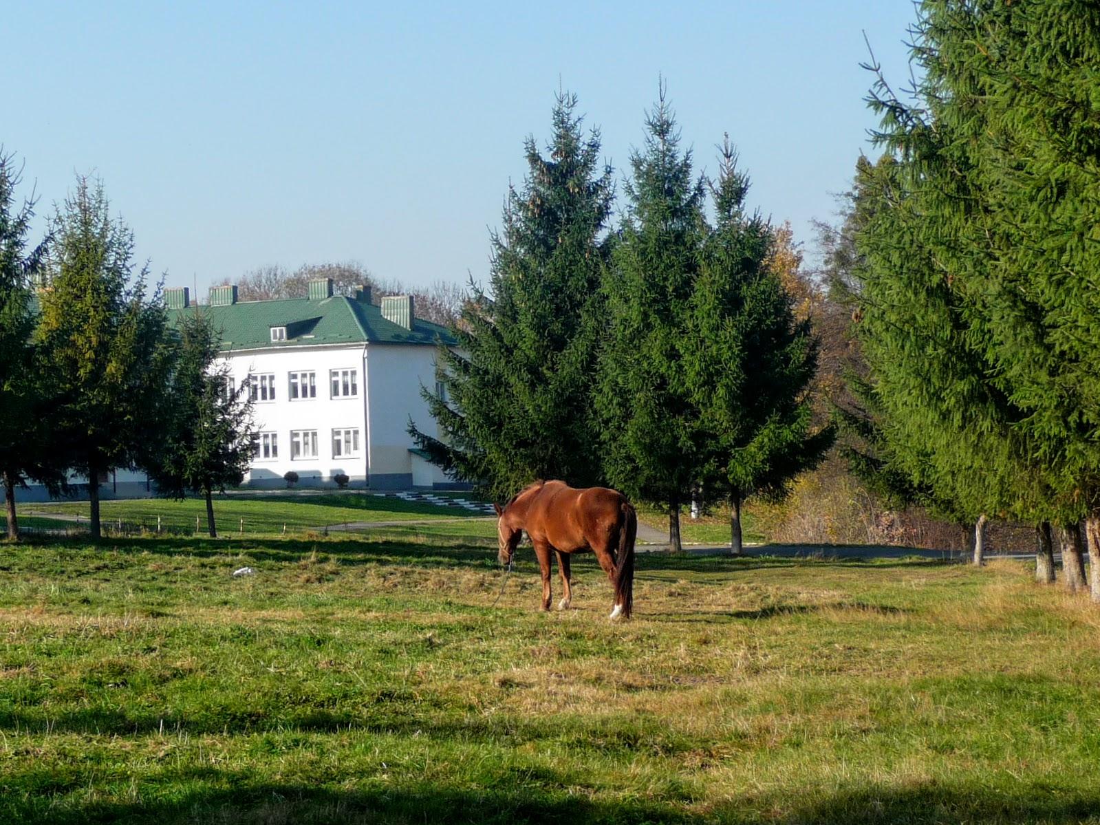Село Стрелков Стрыйского района