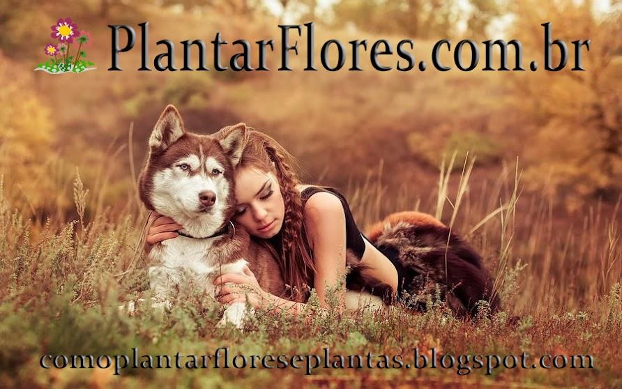 PlantarFlores.com.br
