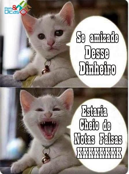 Fotos de piadas de gato para Facebook