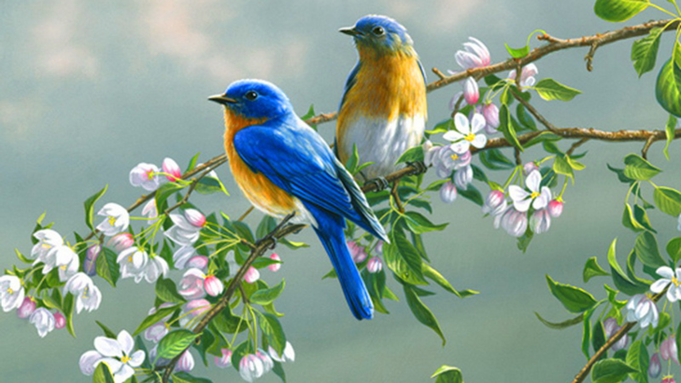 SUN SHINES Colourful Birds Wallpaper