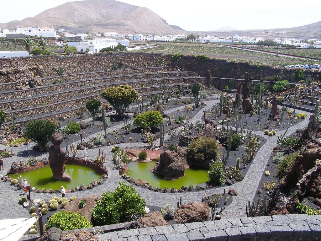 Paradis express jardin de cactus c sar manrique for Jardin de cactus lanzarote