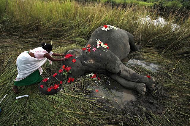 La muerte digna de un elefante