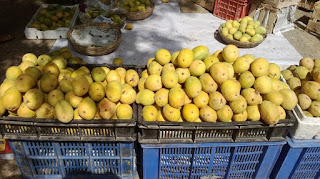 Choosing mangoes, mango, fruit.