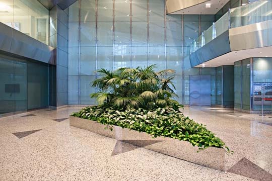 Beautiful-interior-office-plants-from-Phillips
